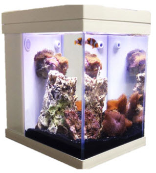 ... JBJ Mini Cubey 3 Gallon Pico LED Series Nano Cube Aquarium Fish Tank